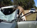 鹿とニアミス
