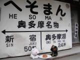 ACCORD 桜 ドライブ