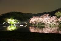 [撮影] GSX1300R 夜桜