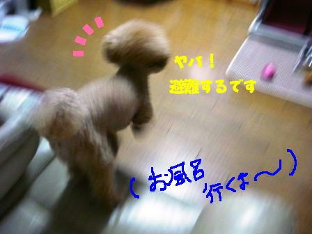 10173_20111017185250.jpg