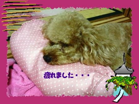 PHOTO101.jpg