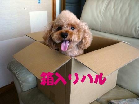 PHOTO102.jpg
