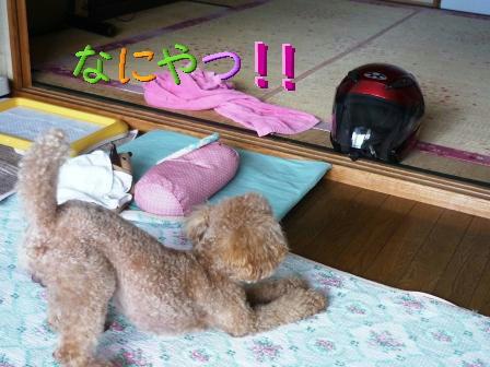 PHOTO103.jpg