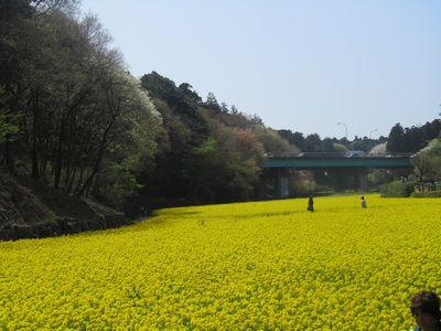 春の裏山-1