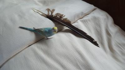 トンビの羽根とぷう