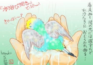 早春の水浴び
