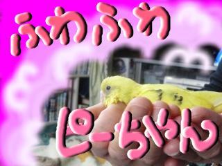 snap_hamukii_20105303332.jpg