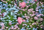 フランス花壇1