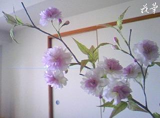 布花・染め花の八重桜