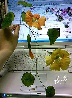 ハンドメイド・ハーブのお花・ナスタチウム(布花・染め花・アートフラワー)