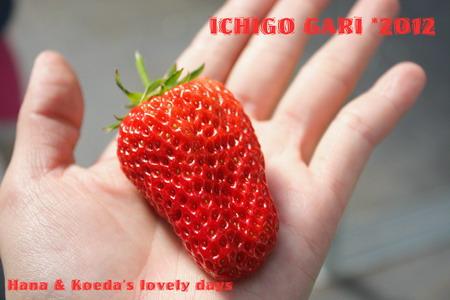 IMG_8395_20120219185116.jpg