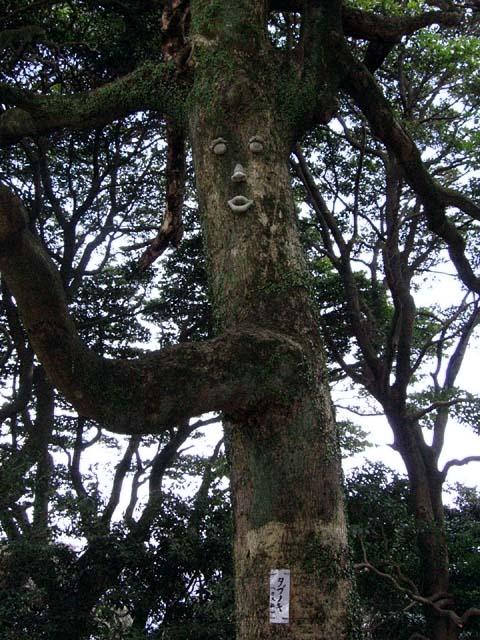 椨の木(たぶのき)(97419 byte)