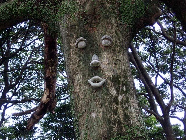 椨の木(たぶのき)(106831 byte)