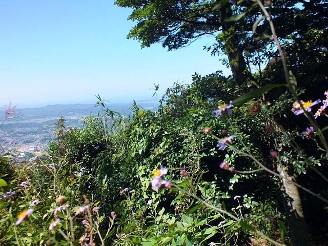 山頂の紫苑(しおん)(91825 byte)