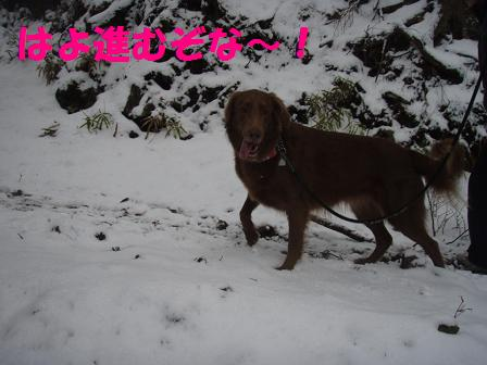 14FEB10 snow covered OYAMA 048a