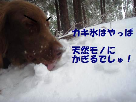 14FEB10 snow covered OYAMA 058