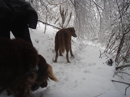 14FEB10 snow covered OYAMA 072a