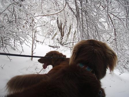 14FEB10 snow covered OYAMA 074a