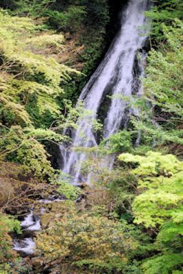 大沢の滝100430-1