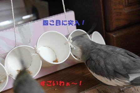 がんばれ~!マロン!
