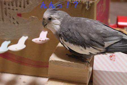 本鳥も気づかないうちに・・