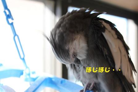 この人(鳥)は・・