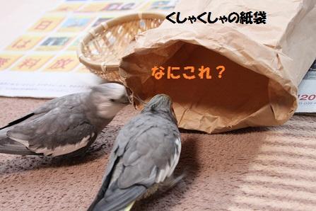 紙袋の興味津々~
