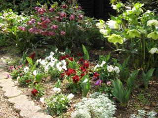 ビオラの春花壇