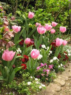 春の花壇(2010年)