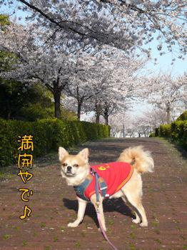 komusan_0404_001