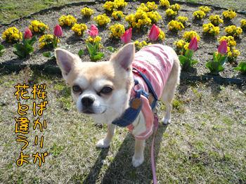 komusan_0404_007