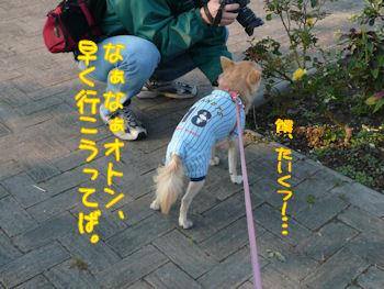 komusan_0407_000