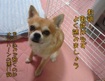 komusan_0410_007