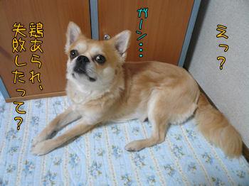 komusan_0419_001