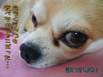 komusan_0419_008