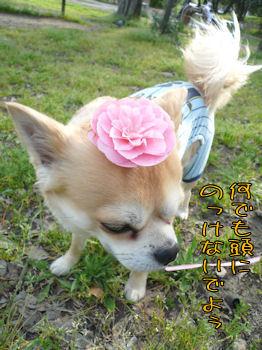 komusan_0427_006