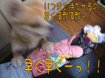 komusan_0429_005