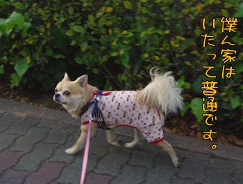 komusan_0503_002
