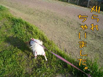 komusan_0503_004