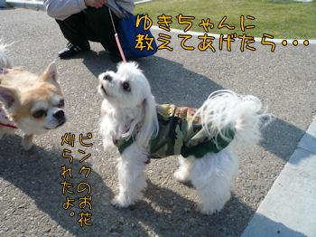 komusan_0503_005
