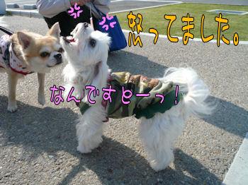 komusan_0503_006