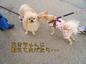 komusan_0503_007