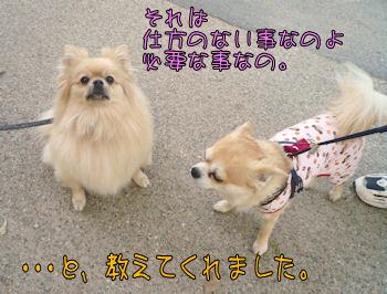 komusan_0503_008