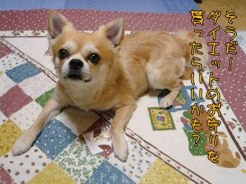 komusan_0511_004
