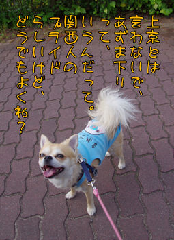komusan_0520_001