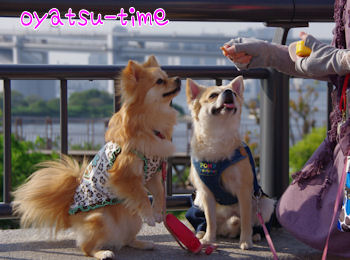 komusan_0521_004
