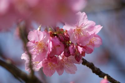 桜100320