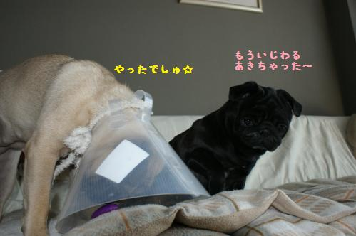いじわるハンちゃん4