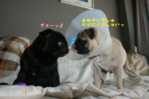 いじわるハンちゃん3