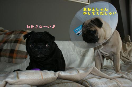 いじわるハンちゃん2